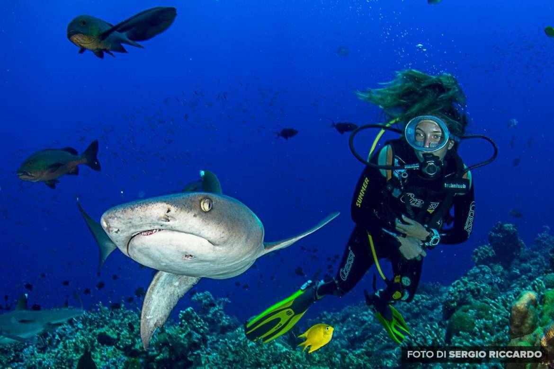 L'amica degli squali - Francesca Reinero