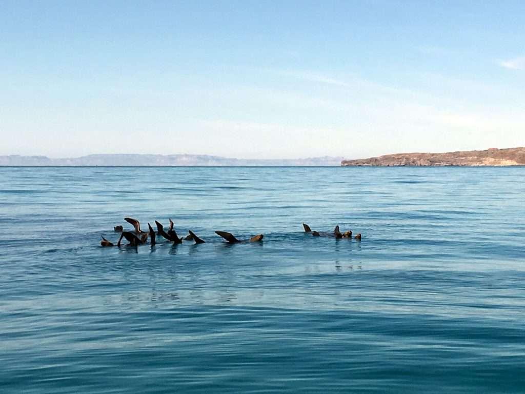 mondiali fotografia subacquea leoni marini