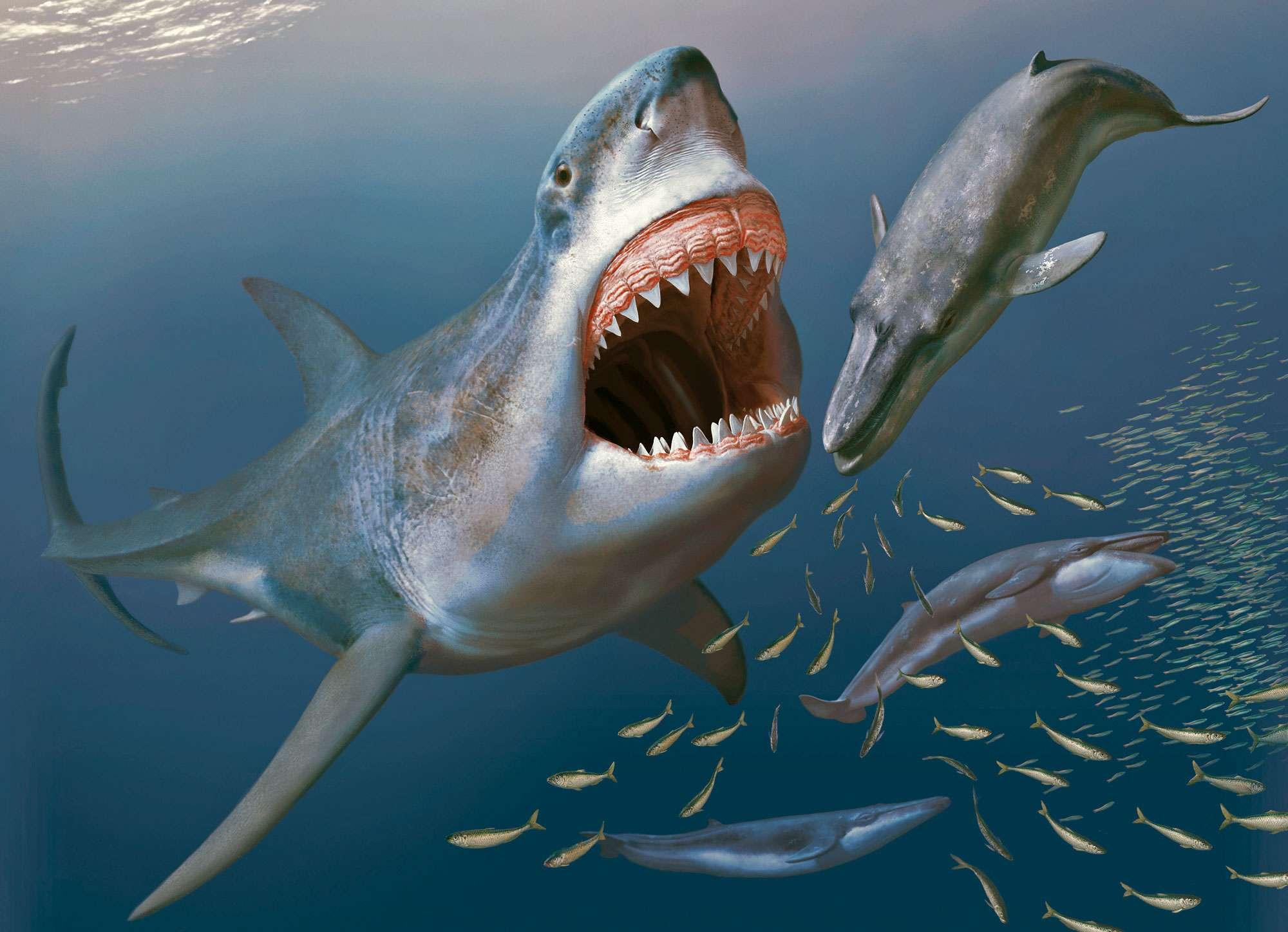 shark il primo squalo trailer film