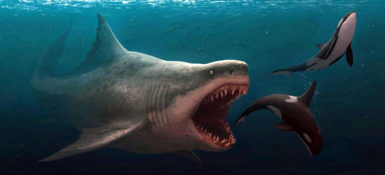 megalodon shark squalo dente