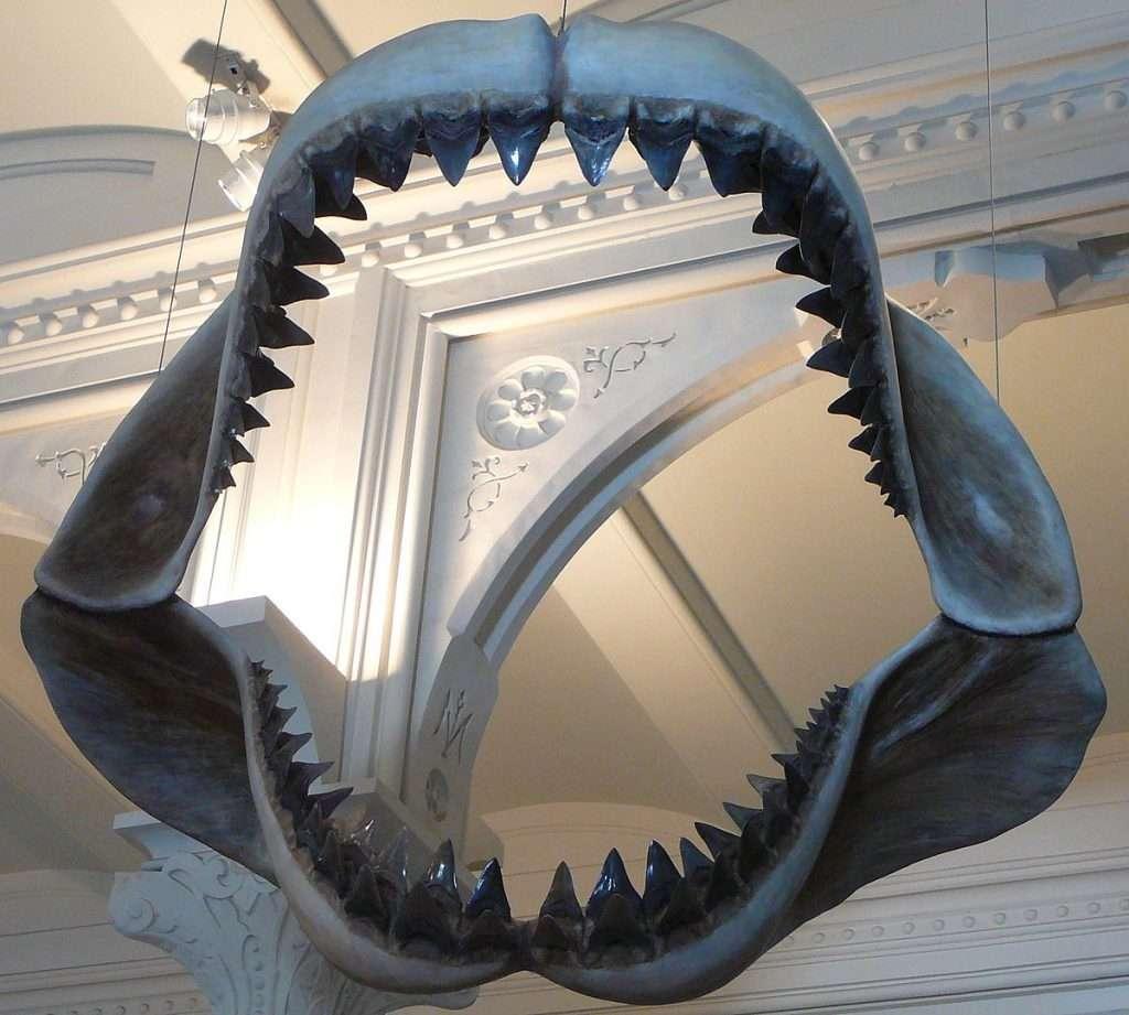 megalodon squalo denti shark