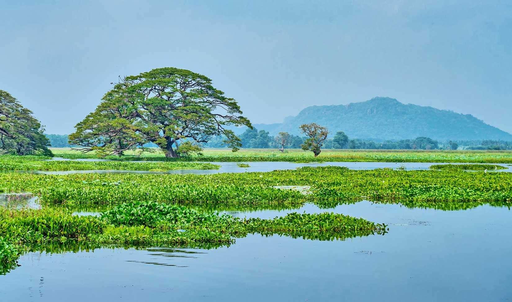 Giornata mondiale dell'acqua 2020