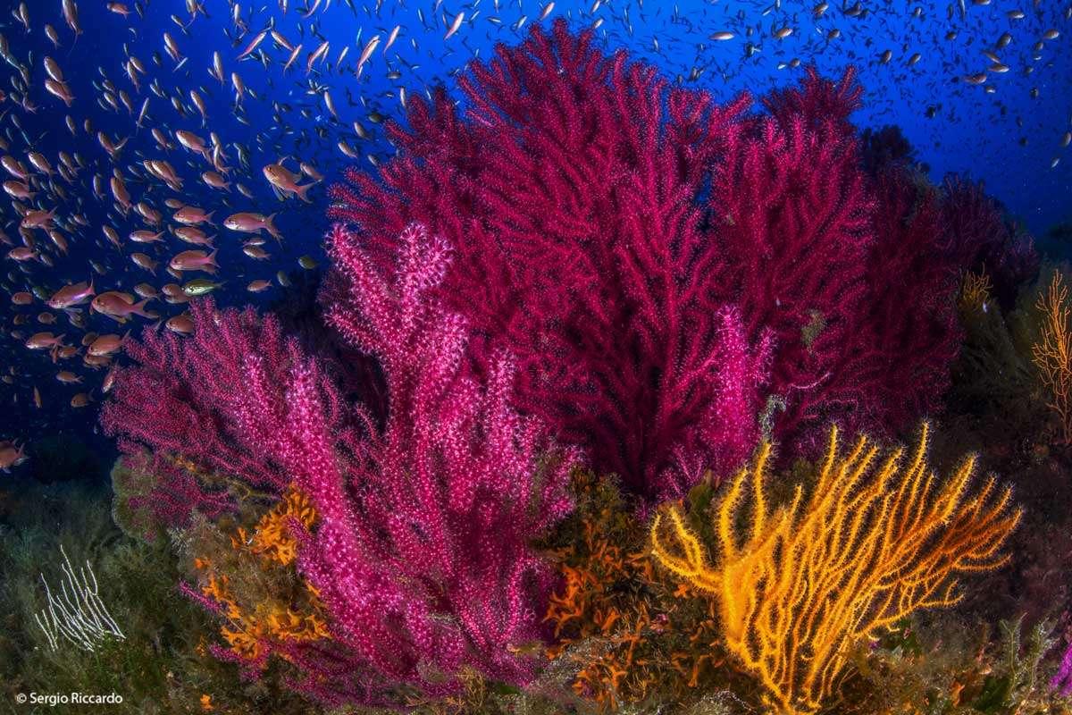Banco di Santa Croce, immersione nel Golfo di Napoli - Immersioni subacquee